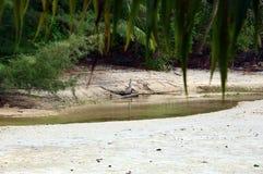 O tronco de árvore olha como um crocodilo fotografia de stock