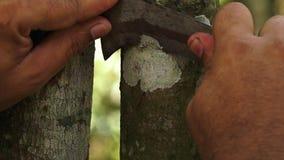 O tronco de uma árvore da canela video estoque