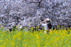 O turista da mulher deve apreciar viajar no campo de flor durante a estação de mola fotos de stock