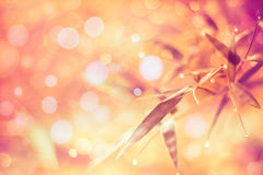 O twinkling ilumina o fundo borrado do bokeh da cor sumário vívido Imagem de Stock Royalty Free