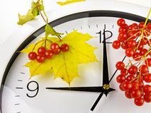 9 O-` Uhr Uhr, Gelbblätter und Viburnum Lizenzfreie Stockfotos