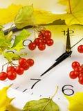 7 O-` Uhr Ziffernblatt, Gelbblätter und Viburnum Stockfoto