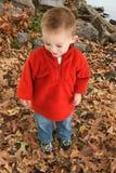 O um anos de idade adoráveis que anda nas folhas Fotos de Stock