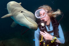 O underwater do golfinho encontra um mergulhador de mergulhador louro imagem de stock royalty free