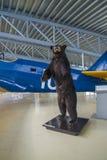 O urso Imagens de Stock