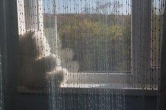 O urso branco senta-se na soleira e olha-se para fora a janela, esperando Presente Infância triste foto de stock