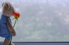 O urso de peluche está na rosa da terra arrendada da janela e na vista para fora da janela imagens de stock royalty free