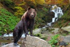 O urso est? em uma pedra foto de stock