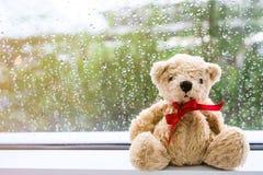 O urso estado de vista para fora a janela, não é triste fotografia de stock