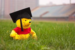 O urso graduado Imagens de Stock Royalty Free