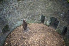 O urso Pit Sculpture Sheffield Botanical Gardens Yorkshi sul fotos de stock royalty free