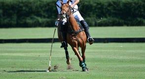 O uso do jogador do polo do cavalo um malho bateu a bola fotografia de stock