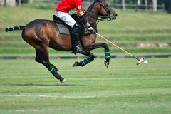 O uso do jogador do polo do cavalo um malho bateu a bola imagem de stock royalty free