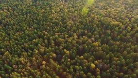 O vídeo panorâmico bonito sobre as partes superiores da floresta, sol brilha filme
