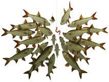 O vôo dos peixes olha um gancho Fotografia de Stock Royalty Free
