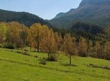 O vale completamente de árvores secas altas, com o Pedraforca no fundo imagens de stock royalty free