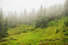 O vale da montanha da névoa e da nuvem ajardina, Carpathian, Ucrânia Imagens de Stock