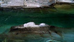 O vale do rio de Verzasca com água clara Lavertezzo, Switzerland vídeos de arquivo