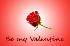 O Valentim levantou-se Fotografia de Stock Royalty Free
