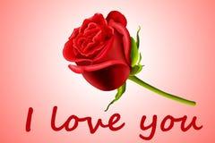 O Valentim levantou-se Fotos de Stock Royalty Free