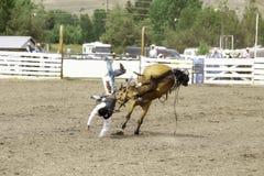 O vaqueiro bucked fora de seu cavalo fotos de stock
