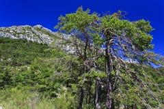 O Var selvagem, montanhoso e florestado foto de stock royalty free