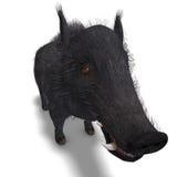 O varrão preto perigoso duro-é eriçado Imagem de Stock Royalty Free