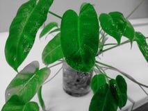 o vaso da folha seja alegre Imagem de Stock