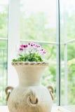 O vaso da terracota ou o potenciômetro de flores com gerânio bonito florescem sobre o fundo da janela, decoração home Imagens de Stock