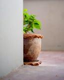 O vaso de flores ao lado da sala Fotos de Stock Royalty Free