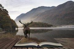 O veado poderoso impressionante dos veados vermelhos olha para fora através do lago para o mo fotografia de stock
