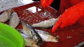 O vendedor dos peixes limpa e cortando peixes frescos no mercado de peixes vídeos de arquivo