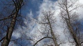 O vento agita as árvores leafless video estoque