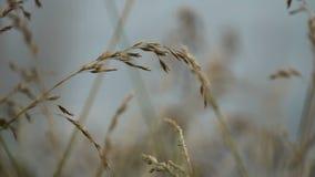 O vento agita a grama vídeos de arquivo