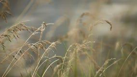 O vento agita a grama verde filme