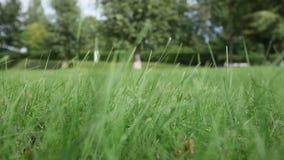 O vento agita a grama verde no campo video estoque