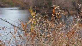 O vento frio do outono agita a grama seca video estoque