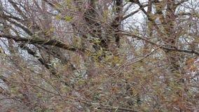 O vento frio do outono agita ramos de árvore vídeos de arquivo
