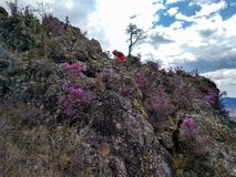 O verão ajardina nas montanhas do Altai fotos de stock royalty free