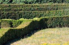 O verão aparou o buxo no montanhês do parque em um gramado da grama verde Fotografia de Stock
