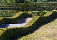 O verão aparou o buxo no montanhês do parque em um gramado da grama verde Foto de Stock Royalty Free