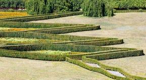 O verão aparou o buxo no montanhês do parque em um gramado da grama verde Imagens de Stock Royalty Free