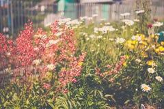 O verão branco cor-de-rosa amarelo floresce o close-up macro Fotografia de Stock Royalty Free