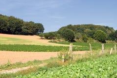 O verão colhe o campo e as árvores Imagens de Stock