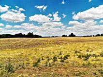 O verão colhe o parto na terra Foto de Stock