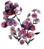 O verão da aquarela floresce flox roxos imagem de stock royalty free