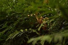 O verão da cor verde deixa árvores Imagens de Stock