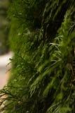 O verão da cor verde deixa árvores Fotos de Stock