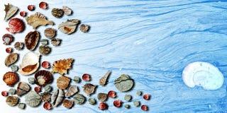 O verão descasca o fundo de madeira azul da bandeira foto de stock
