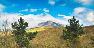 O verão ensolarado bonito da montanha e da floresta de Crimeia ajardina Foto de Stock Royalty Free